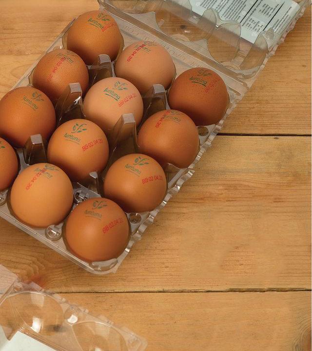 Funtuna Eggs